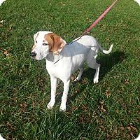 Adopt A Pet :: Sophie - Waldorf, MD