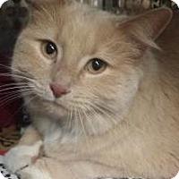 Adopt A Pet :: Betzy - Siren, WI