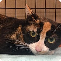 Adopt A Pet :: Angelica - Gainesville, FL