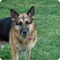 Adopt A Pet :: Bogey - Howell, MI
