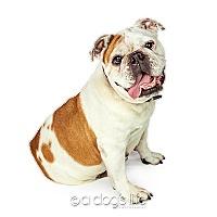 Adopt A Pet :: Betsy - Tempe, AZ