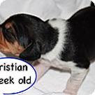 Adopt A Pet :: Penelope's Christian