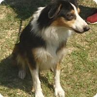 Adopt A Pet :: Crickett - Umatilla, FL
