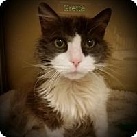 Adopt A Pet :: Gretta - Worcester, MA