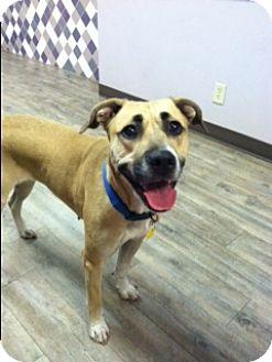 German Shepherd Dog Mix Dog for adoption in Phoenix, Arizona - Artemis