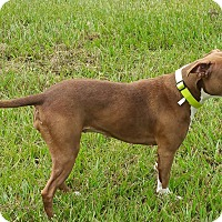 Adopt A Pet :: Grace - Lorida, FL