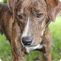 Adopt A Pet :: Mason - SOUTHINGTON, CT