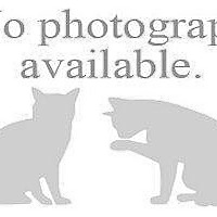 Adopt A Pet :: CARLOTON 2 - Hampton, VA