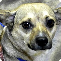 Adopt A Pet :: TT - Yreka, CA