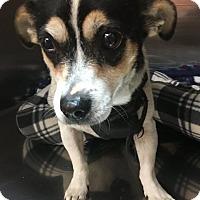 Adopt A Pet :: Miss Ellie - New Orleans, LA