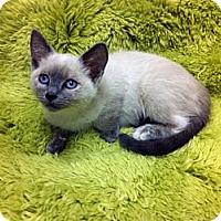 Adopt A Pet :: Daphne - Irvine, CA