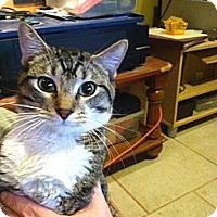 Adopt A Pet :: Luke - Pittstown, NJ