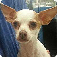 Adopt A Pet :: Story - geneva, FL