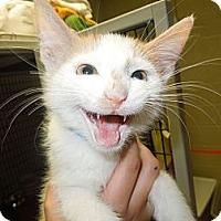 Adopt A Pet :: Timmy - Medina, OH