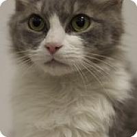 Adopt A Pet :: Betsy - Sacramento, CA