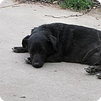 Adopt A Pet :: Lily - Roosevelt, UT