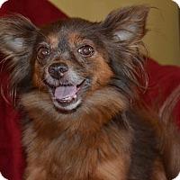 Adopt A Pet :: Harriette - Marietta, GA