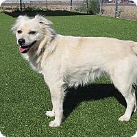 Adopt A Pet :: Desi - Meridian, ID