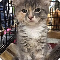Adopt A Pet :: Eleanor - Pittstown, NJ