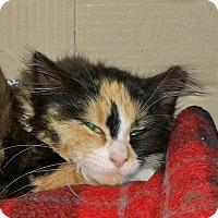 Adopt A Pet :: Cher - Island Park, NY