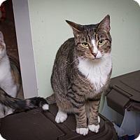 Adopt A Pet :: Albella - Chicago, IL