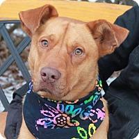 Adopt A Pet :: Spirit - Garfield Heights, OH