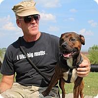 Adopt A Pet :: Mr. Wrinkles - Elyria, OH
