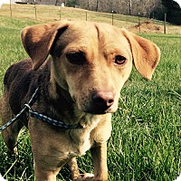 Adopt A Pet :: Jazz - Powder Springs, GA