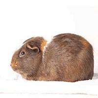 Adopt A Pet :: *Urgent* Romeo - Fullerton, CA