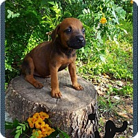 Adopt A Pet :: Basia - Leming, TX