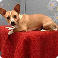 Adopt A Pet :: Charlie - Lomita, CA