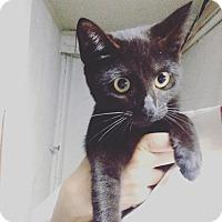 Adopt A Pet :: kitten #3 - Pompton Lakes, NJ