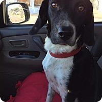 Adopt A Pet :: Delila - Fenton, MO