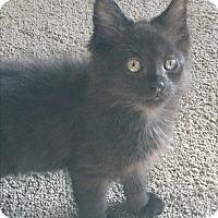Adopt A Pet :: Osita - Mount Laurel, NJ