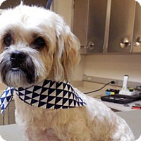 Adopt A Pet :: Toby - Wildomar, CA