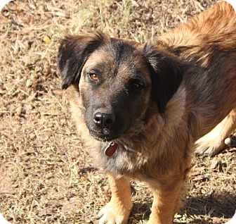 Shepherd (Unknown Type)/Terrier (Unknown Type, Medium) Mix Dog for adoption in Pulaski, Tennessee - Lizzie