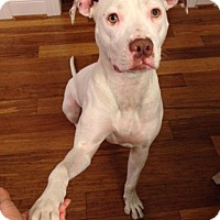 Pit Bull Terrier Dog for adoption in McCalla, Alabama - Sookie