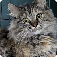 Adopt A Pet :: Jill - Grinnell, IA
