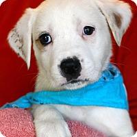 Adopt A Pet :: Gary - West Grove, PA