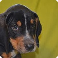 Adopt A Pet :: Chester - Conway, AR