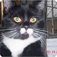 Adopt A Pet :: Thumbalina - Pendleton, OR