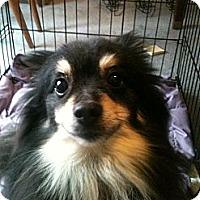 Adopt A Pet :: T-Bone - Wasilla, AK