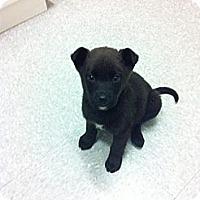 Adopt A Pet :: Weston - Saskatoon, SK