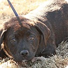 Adopt A Pet :: Helena
