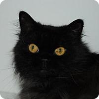 Adopt A Pet :: Max - La Jolla, CA