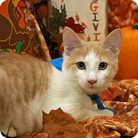 Adopt A Pet :: Larry - Bedford, TX