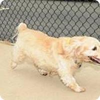 Adopt A Pet :: Sandy -Adopted! - Kannapolis, NC