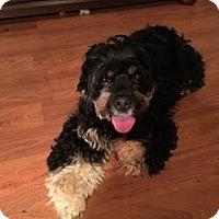 Adopt A Pet :: Winnie - Alpharetta, GA
