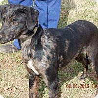 Adopt A Pet :: Blue(30 lb) Deserves Good Life - Sussex, NJ