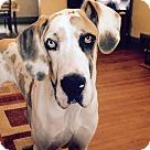 Adopt A Pet :: Odin